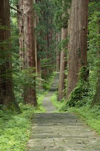 羽黒山参道の杉並木の写真素材 [FYI04817597]