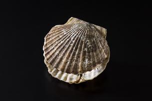 ホタテ貝の写真素材 [FYI04817656]