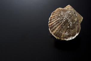 ホタテ貝の写真素材 [FYI04817657]