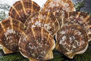 ホタテ貝の写真素材 [FYI04817661]