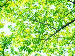 新緑の写真素材 [FYI04817785]