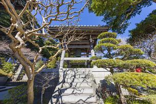 観音造立1300年を迎えた長谷寺の鐘楼の写真素材 [FYI04817815]