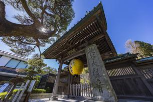 観音造立1300年を記念して掲げられた長谷寺山門の金色提灯の写真素材 [FYI04817832]