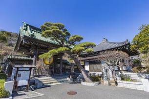 観音造立1300年を記念して掲げられた長谷寺山門の金色提灯の写真素材 [FYI04817834]