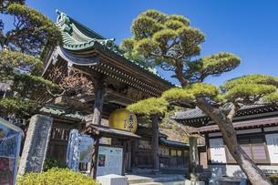 観音造立1300年を記念して掲げられた長谷寺山門の金色提灯の写真素材 [FYI04817836]