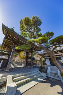 観音造立1300年を記念して掲げられた長谷寺山門の金色提灯の写真素材 [FYI04817837]