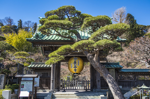 観音造立1300年を記念して掲げられた長谷寺山門の金色提灯の写真素材 [FYI04817843]