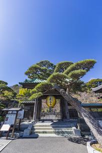 観音造立1300年を記念して掲げられた長谷寺山門の金色提灯の写真素材 [FYI04817846]