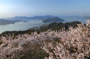竜王山展望台の桜と瀬戸内海の写真素材 [FYI04817999]