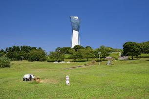いわき 三崎公園のマリンタワーの写真素材 [FYI04818120]