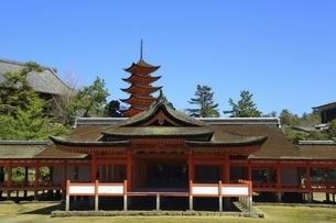 厳島神社 客神社と五重塔の写真素材 [FYI04818533]