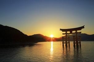 厳島神社 大鳥居と夕日の写真素材 [FYI04818535]