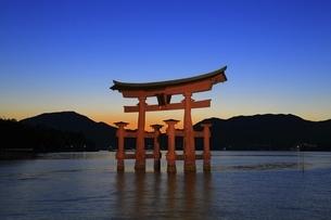 厳島神社 大鳥居ライトアップの写真素材 [FYI04818538]