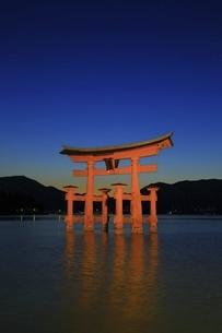 厳島神社 大鳥居ライトアップの写真素材 [FYI04818540]