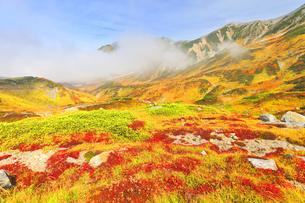秋の立山 室堂平の草紅葉の写真素材 [FYI04818588]