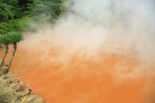 別府地獄めぐり 血の池地獄の写真素材 [FYI04818589]