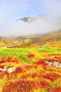 秋の立山 室堂平の草紅葉の写真素材 [FYI04818590]