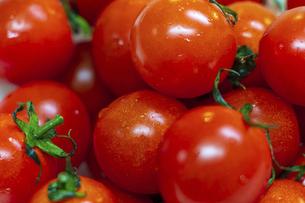 鮮やかな赤色のミニトマトの写真素材 [FYI04818655]