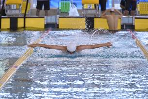 競泳のバタフライの写真素材 [FYI04818906]