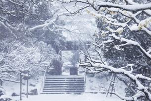 鎌倉の東慶寺の山門のロウバイと雪の写真素材 [FYI04819642]