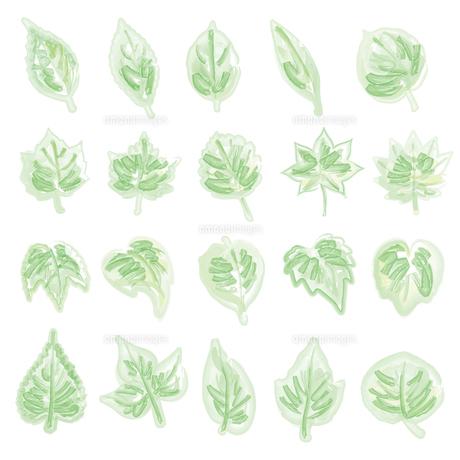 水彩画風の葉っぱイラストのイラスト素材 [FYI04819955]