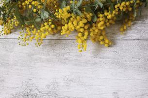 木材模様背景のミモザの花の写真素材 [FYI04819969]