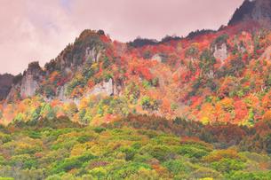 秋の戸隠連山 朝焼け雲と紅葉の写真素材 [FYI04820079]