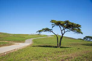 ひたち海浜公園 みはらしの丘と青空の写真素材 [FYI04820099]