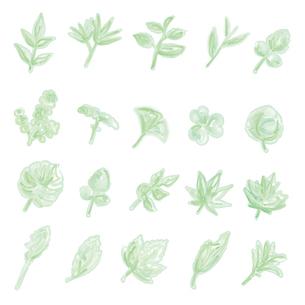 水彩画風の葉っぱイラストのイラスト素材 [FYI04820929]