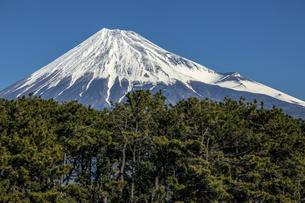 富士山と松林の写真素材 [FYI04821349]