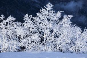 美ヶ原高原の霧氷の写真素材 [FYI04821356]