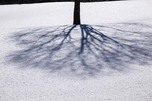雪面の木陰の写真素材 [FYI04821371]
