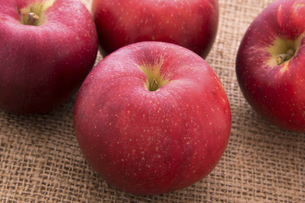 あかねりんごの写真素材 [FYI04821443]