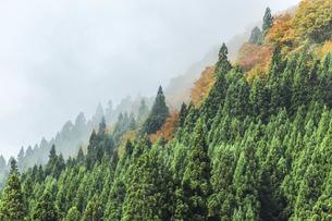 霧かかる森林の写真素材 [FYI04821505]