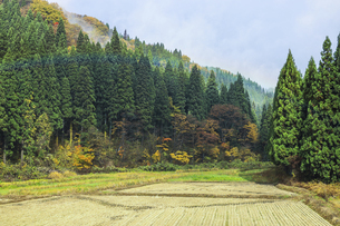 霧かかる森林と水田風景の写真素材 [FYI04821508]
