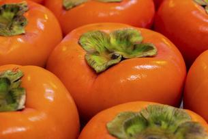 鮮やかなオレンジ色の柿の写真素材 [FYI04821680]