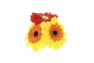 ガーベラの花束の写真素材 [FYI04821788]