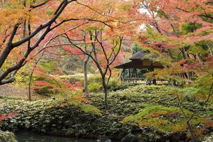 六義園 紅葉のつつじ茶屋の写真素材 [FYI04821854]