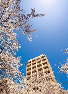 桜とマンションの写真素材 [FYI04822000]