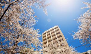 桜とマンションの写真素材 [FYI04822001]