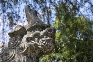 熊野神社 狛犬の写真素材 [FYI04822180]