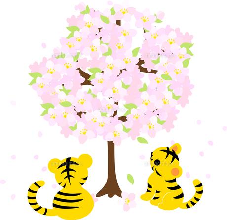 桜を見上げる可愛い虎ちゃん達のイラストのイラスト素材 [FYI04822235]