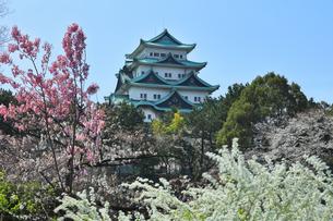 名古屋城天守閣と春の花の写真素材 [FYI04822678]