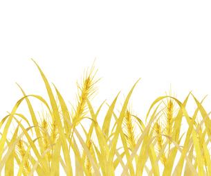 麦畑 水彩画のイラスト素材 [FYI04822799]