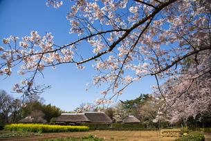 桜咲く房総のむら上総の農家の写真素材 [FYI04822953]