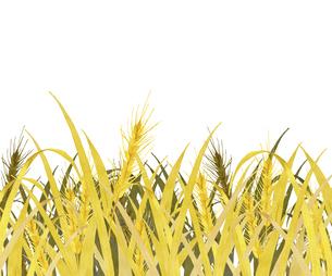 麦畑 水彩画のイラスト素材 [FYI04823066]