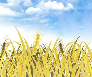 麦畑 水彩画のイラスト素材 [FYI04823067]