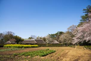 房総のむら 畑と上総の農家の写真素材 [FYI04823191]