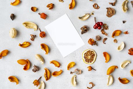 コンクリートの平面に置かれた白い紙と植物のオブジェの写真素材 [FYI04823438]