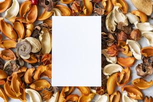 コンクリートの平面に置かれた白い紙と植物のオブジェの写真素材 [FYI04823439]